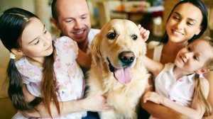 Собака в семье-уход
