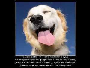 Интересное о собаках
