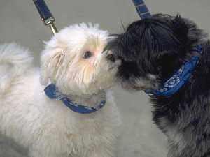 Микоплазмоз - болезнь собак, что делать?