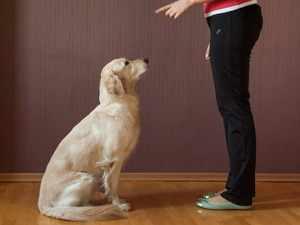 Дрессирова собак