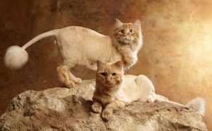 Как самостоятельно подстричь кота