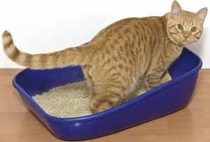 Как проявляется мочекаменная болезнь у котов