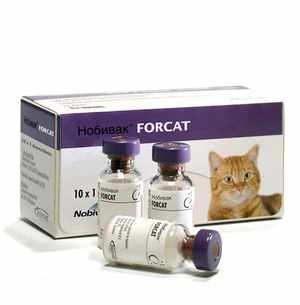 Меры предосторожности при иммунизации кошек препаратом Нобивак