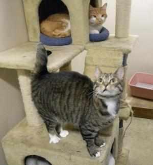 Для чего нужно стерилизовать кошек
