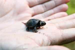 Самые маленькие животные планеты