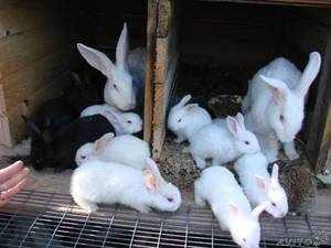 Разноцветные кролики