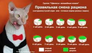 Сколько раз в день кормить кошек