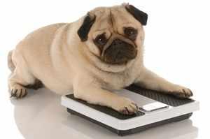 Вес собаки