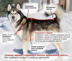 Одевать правильно шлейку на собак