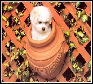 Собака в кувшине