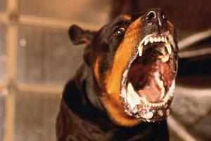 Бешенство у собак-в чем опасность для человека