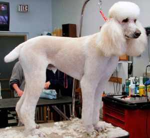 Профилактический осмотр собаки у ветеринара