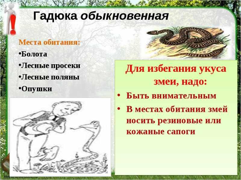 Гадюка змея ядовитая -опасно