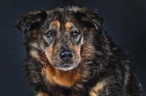Продолжительность жизни уличных и домашних собак
