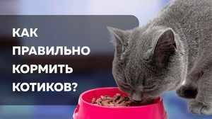 Кормление котов после касртрации