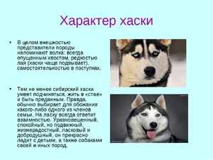 Порода собаки хаски