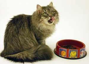Сибирская кошка - правильное питание