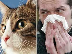 Аллергия на котах