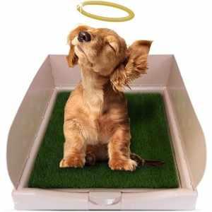 Лоток для собак - правила выбора