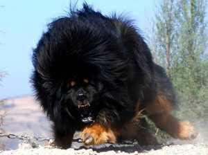 Какие собаки самые крупные
