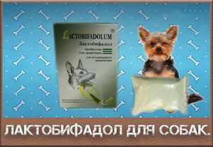 Лактобифадол - ветеринарный препарат