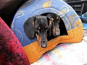 Виды домиков для собаки