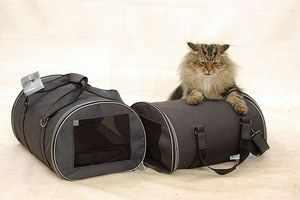Какие есть переноски для кошек