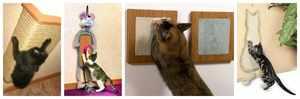 Разнообразие кошачьих когтеточек