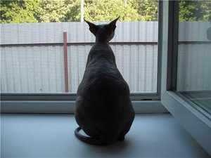 Кошка перед родами