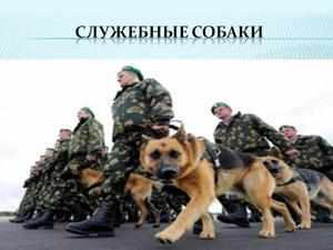 Служба собак в войсках