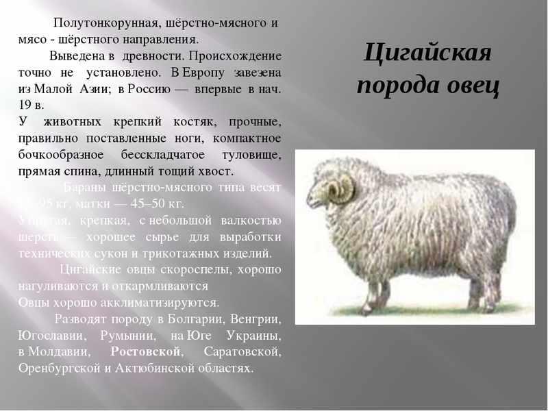 Овцеводство и козоводство