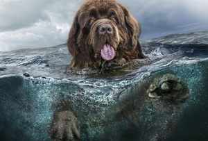 Какие повадки у собаки Ньюфаундленда
