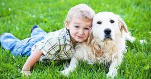 Клички для домашних животных