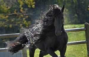 Самые красивые лошади в мире