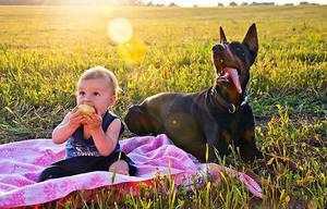 Доберман играет с детьми