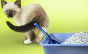Котенок не хочет идти в лоток