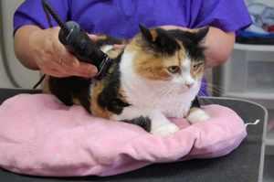 Советы по стрижке кота в домашних условиях