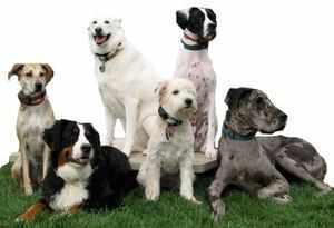 Собаки разных пород - особенности