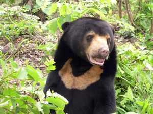Где обитают медведи