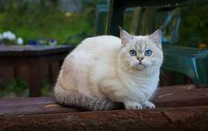 Рост кошек