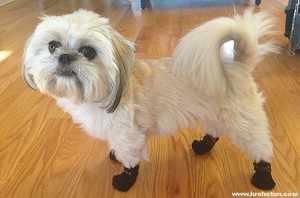 Пушистая собачка в ботинках