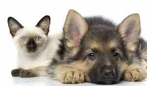 Кошка с собакой могут стать лучшими друзьями