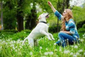 Как содержать собак