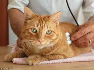 Кошка в клинике у ветеринара