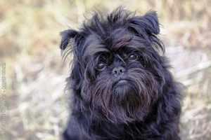 Породы собак и их разновидность