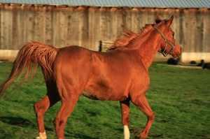 Какую скорость развивает лошадь