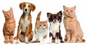 Лечение собак и кошек