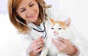 Ветеринар с пациентом