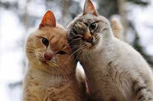 Кошки без блох