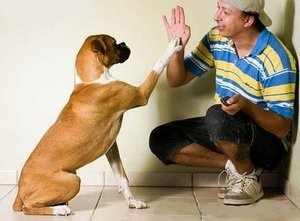 Правильная дрессировка собаки дома